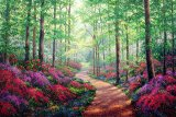 Woodland Walk by Collection